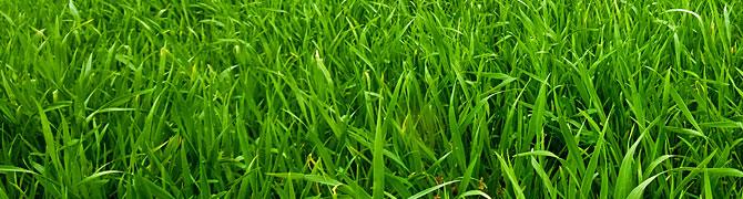 Gras ernten mit dem Lohnunternehmen Walter Schütt aus Lütau